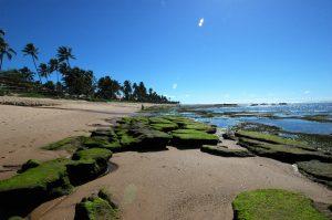 traslado tivoli praia do forte